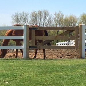 oak gate (1)
